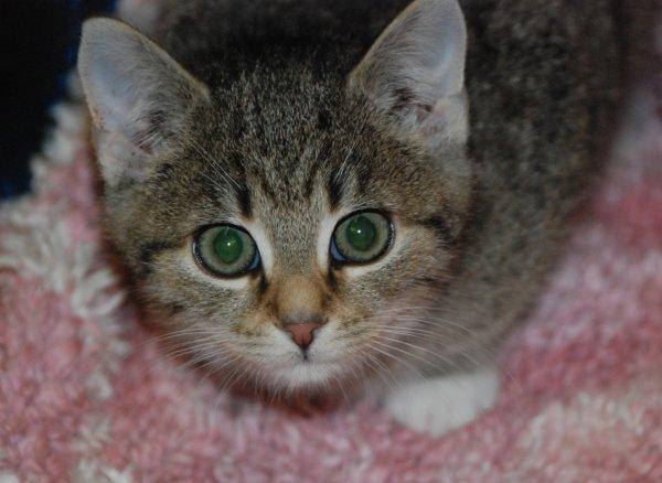 Pflegekraft für unsere Katzenstationen gesucht