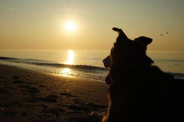 Schon jetzt den Urlaub mit Hund planen