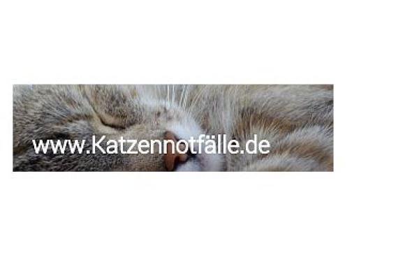 Katzennotfälle