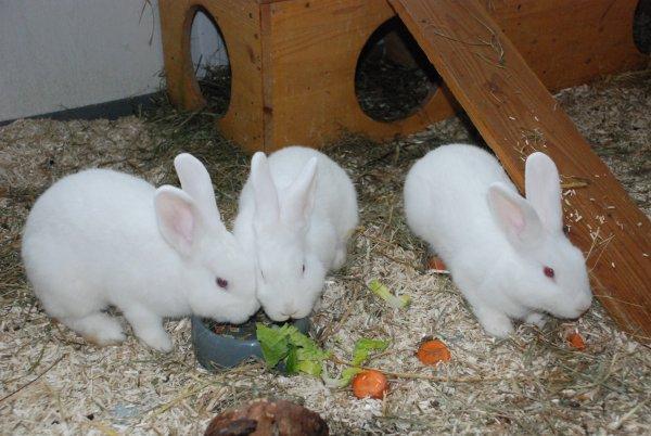 Roger, Rabbit und Rex