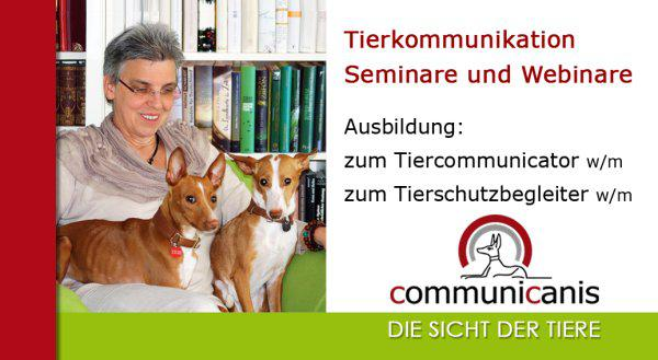 Communicanis