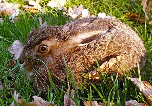 Frühlingserwachen in der Natur