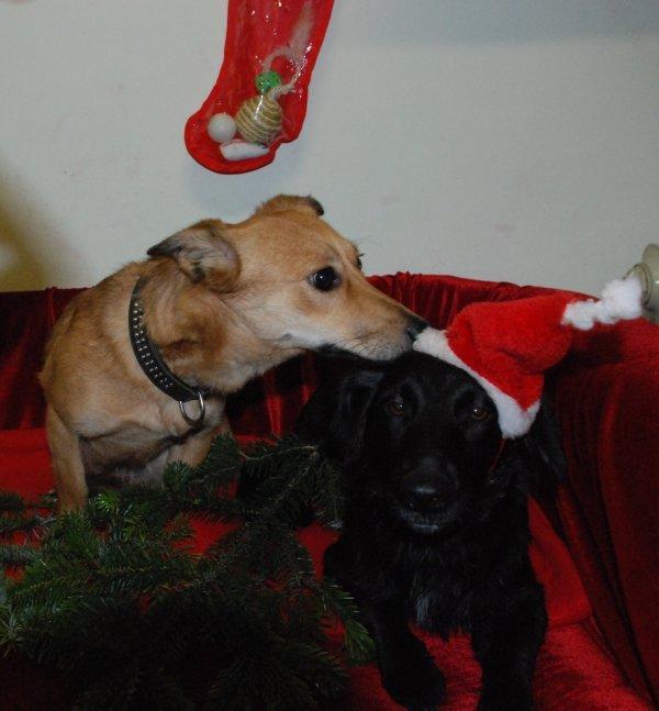Tierbescherung am 23. Dezember im Tierheim