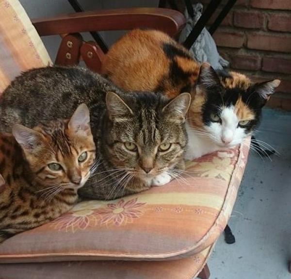 Zwei Katzen in Bad Brückenau entlaufen